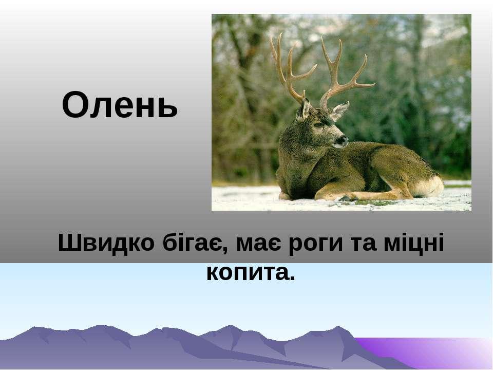 Олень Швидко бігає, має роги та міцні копита.