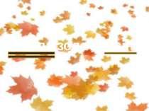 Настала золота осінь.