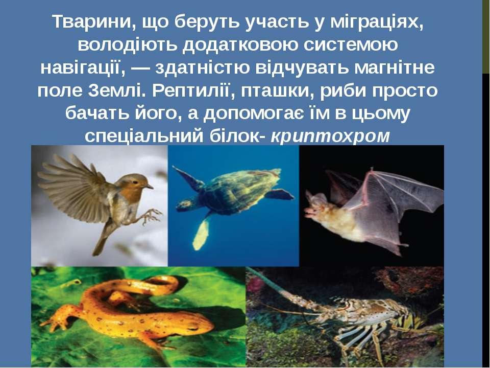 Тварини, що беруть участь у міграціях, володіють додатковою системою навігаці...