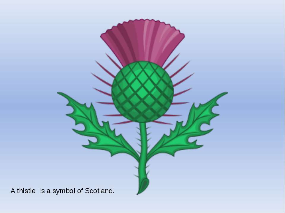 A thistle is a symbol of Scotland.