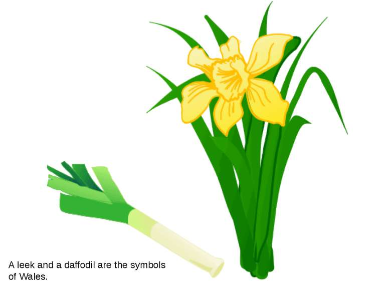 A leek and a daffodil are the symbols of Wales.