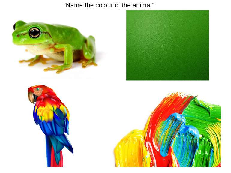 ''Name the colour of the animal''