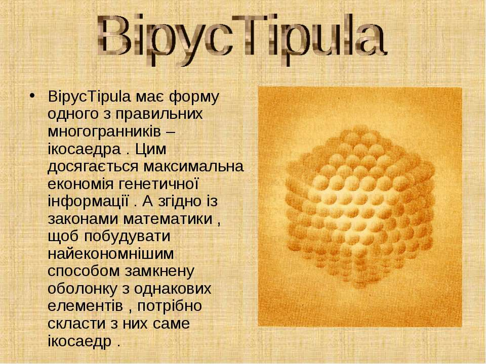ВірусTipula має форму одного з правильних многогранників – ікосаедра . Цим до...
