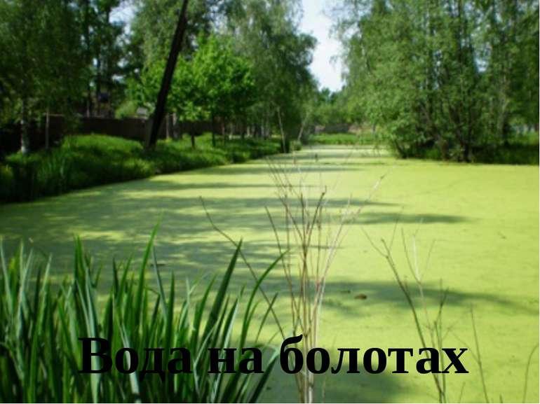 Вода на болотах