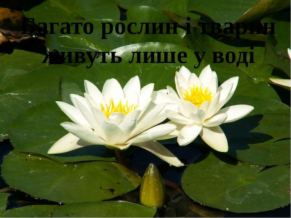 Багато рослин і тварин живуть лише у воді