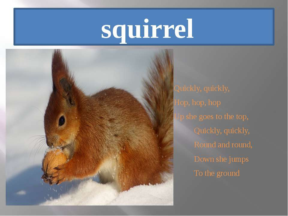 squirrel Quickly, quickly, Hop, hop, hop Up she goes to the top, Quickly, qui...