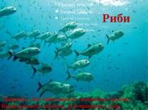 Риби Тварини, тіло яких вкрите слизькою лускою. Вони дихають киснем, розчинен...