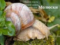 Молюски