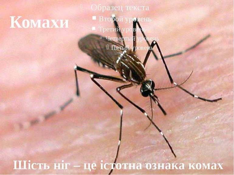 Комахи Шість ніг – це істотна ознака комах