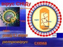 схема білкова оболонка глікопротеїд оболонка РНК ядро з ревертазою