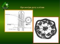 Органоїди руху клітин ТДМА