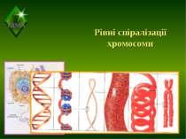 Рівні спіралізації хромосоми ТДМА