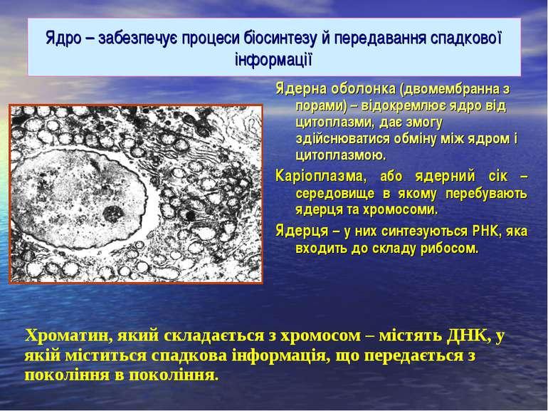 Ядро – забезпечує процеси біосинтезу й передавання спадкової інформації Ядерн...