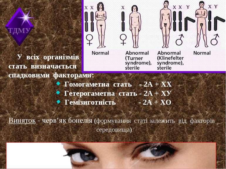 У всіх організмів стать визначається спадковими факторами: Гомогаметна стать ...