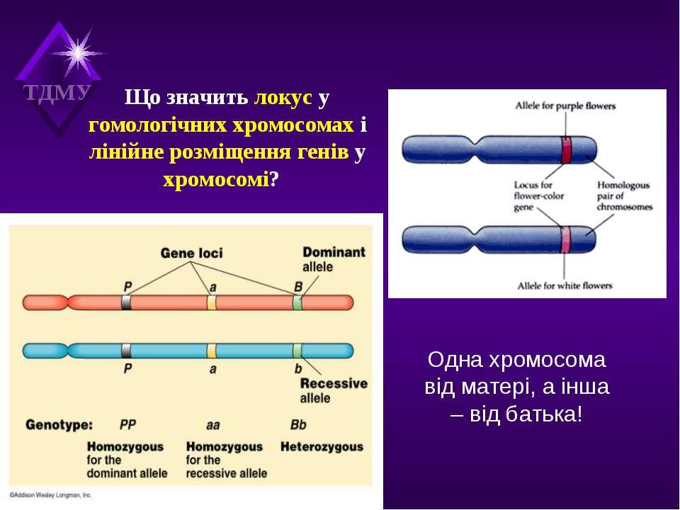 Що значить локус у гомологічних хромосомах і лінійне розміщення генів у хромо...