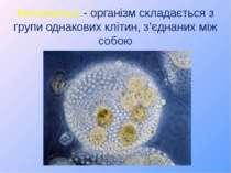 Колоніальні - організм складається з групи однакових клітин, з'єднаних між собою