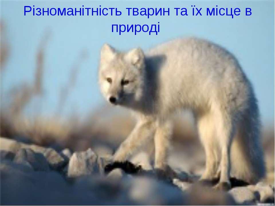 Різноманітність тварин та їх місце в природі