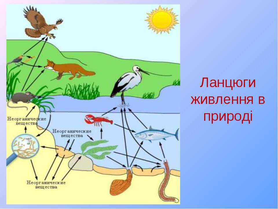Ланцюги живлення в природі