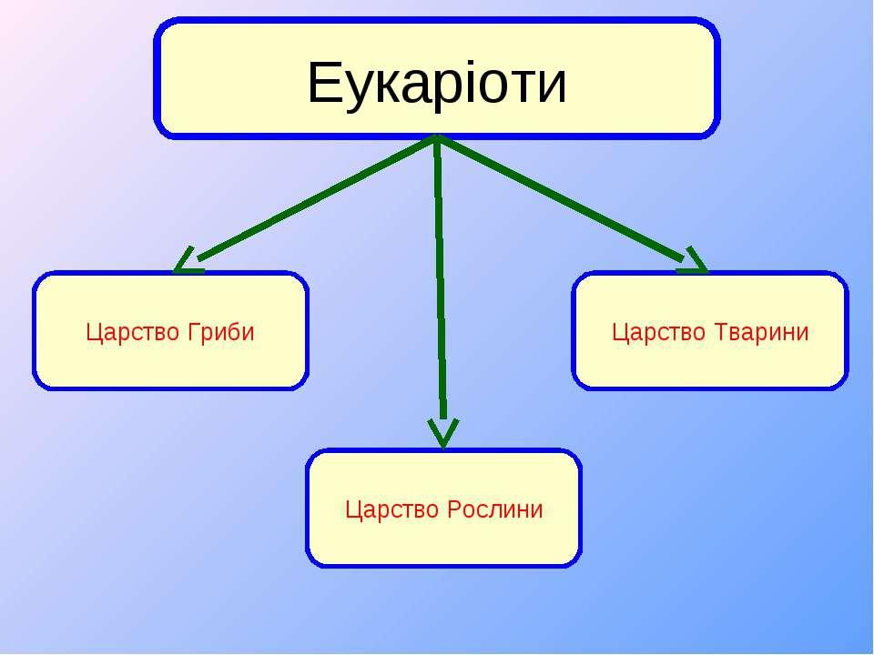 Царство Гриби Царство Рослини Царство Тварини Еукаріоти