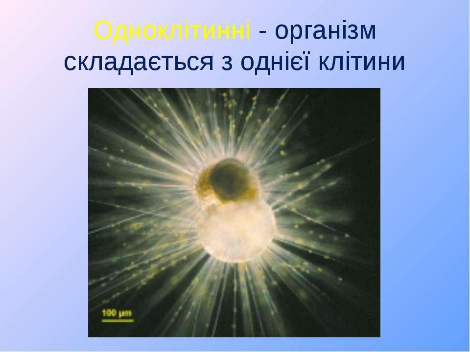 Одноклітинні - організм складається з однієї клітини
