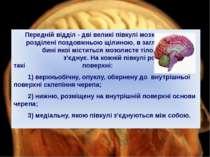 Передній відділ - дві великі півкулі мозку розділені поздовжньою щілиною, в з...