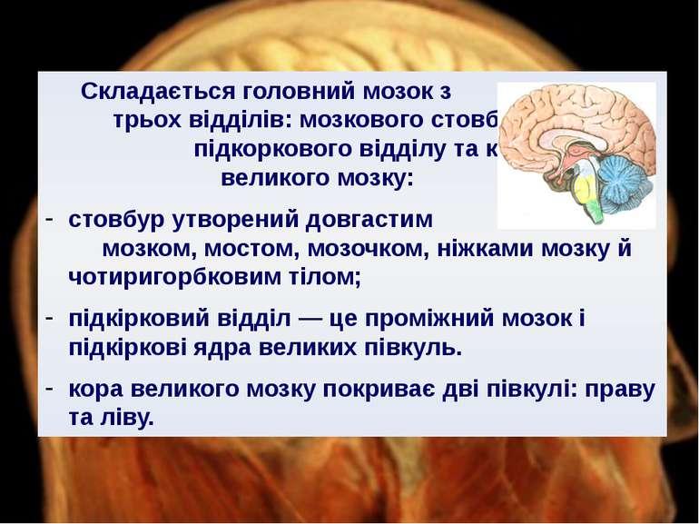 Складається головний мозок з трьох відділів: мозкового стовбура, підкоркового...
