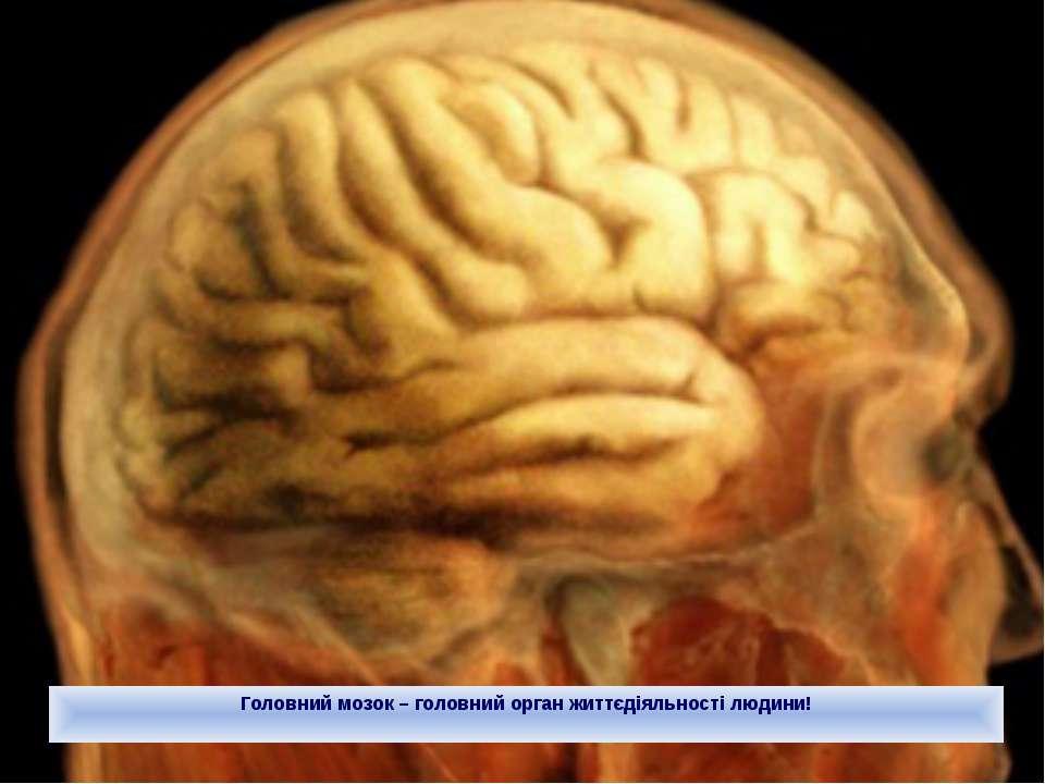 Головний мозок – головний орган життєдіяльності людини!