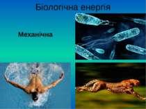 Біологічна енергія Механічна