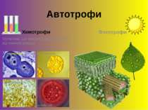 Автотрофи Хемотрофи Організми, що використовують енергію від хімічних реакцій...