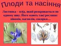 Листянка – плід, який розкривається по одному шву. Його мають такі рослини: п...