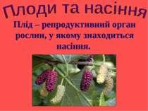 Плід – репродуктивний орган рослин, у якому знаходиться насіння.