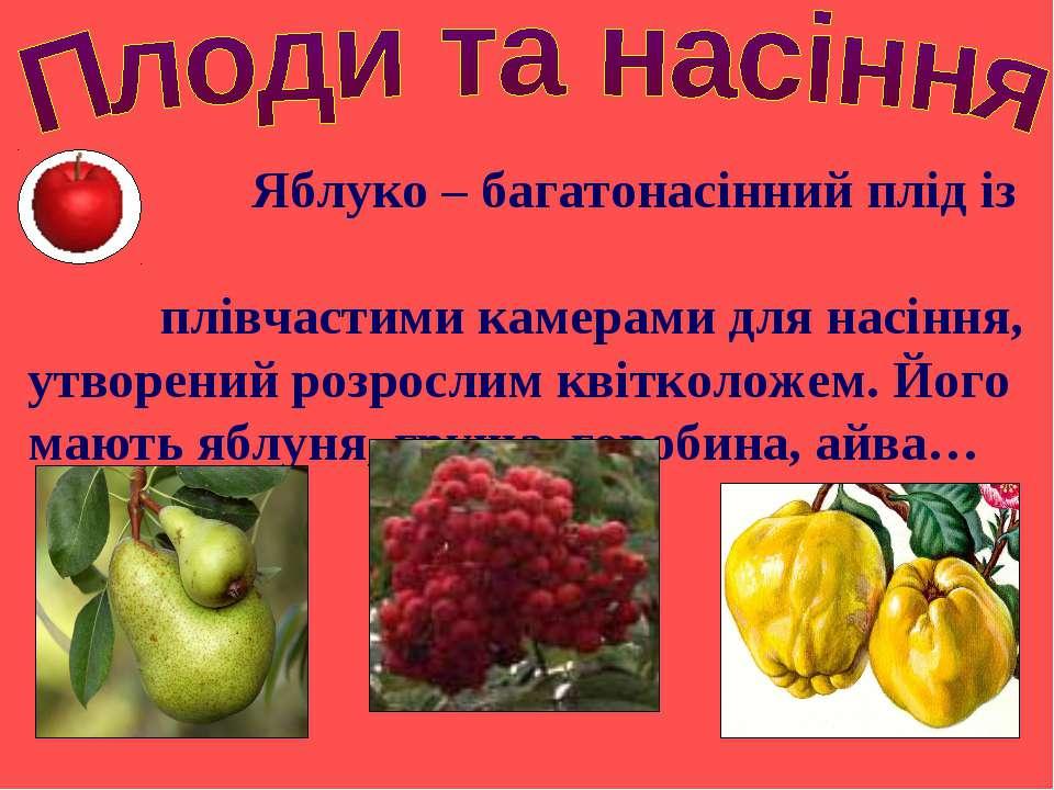 Яблуко – багатонасінний плід із плівчастими камерами для насіння, утворений р...