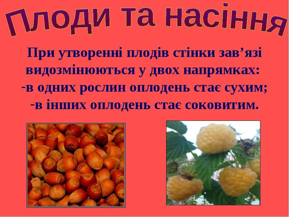 При утворенні плодів стінки зав'язі видозмінюються у двох напрямках: в одних ...
