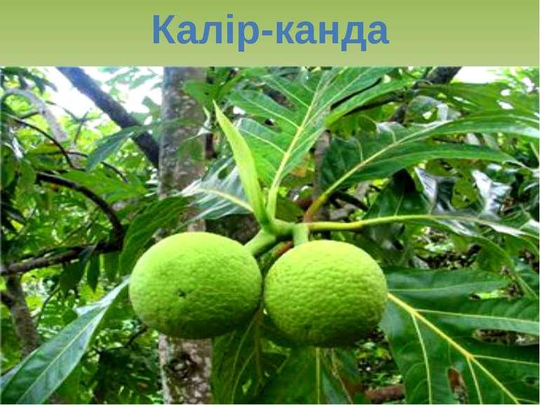 Калір-канда