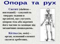 Скелет (skeletos – висохший) – сукупність твердих тканин в організмі, що слуг...