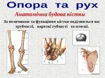 Анатомічна будова кістки За величиною та функціями кістки поділяються на: тру...
