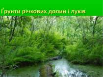 Ґрунти річкових долин і луків