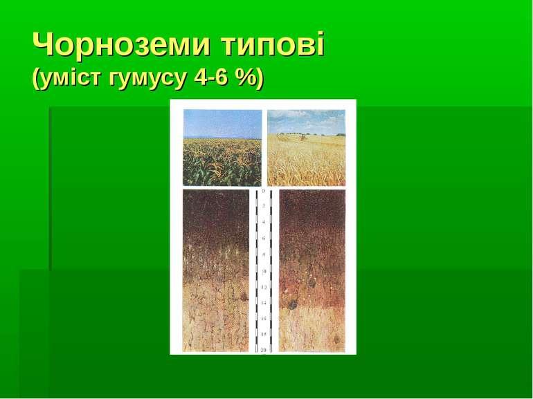 Чорноземи типові (уміст гумусу 4-6 %)