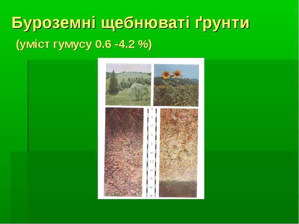Буроземні щебнюваті ґрунти (уміст гумусу 0.6 -4.2 %)