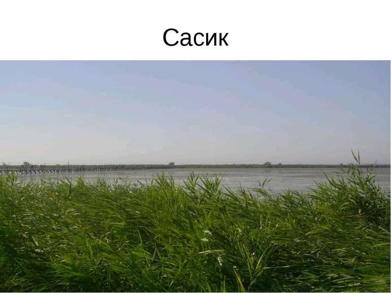 Сасик