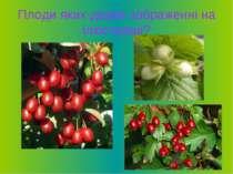 Плоди яких дерев зображенні на ілюстрації?