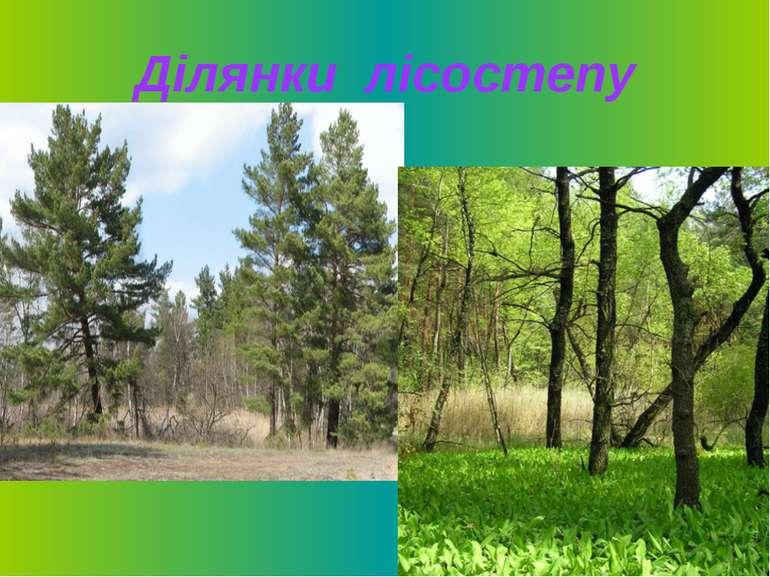 Ділянки лісостепу