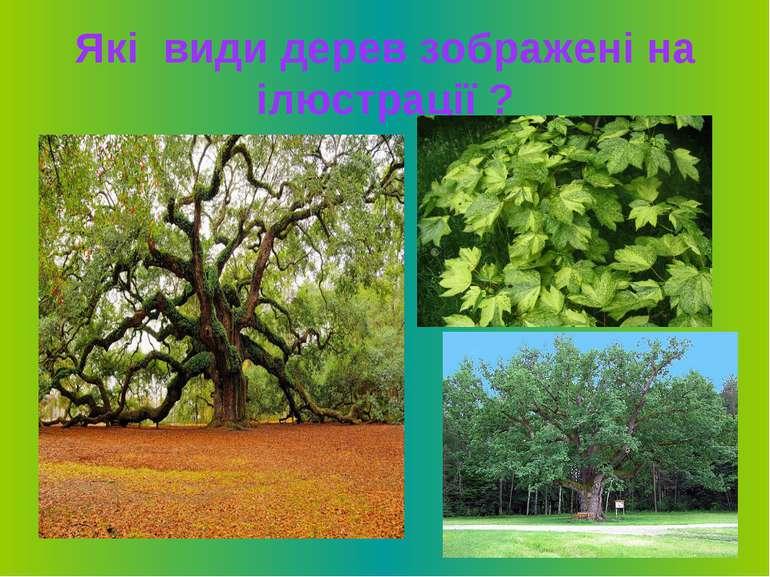 Які види дерев зображені на ілюстрації ?