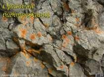 4 Лишайник руйнують скелі