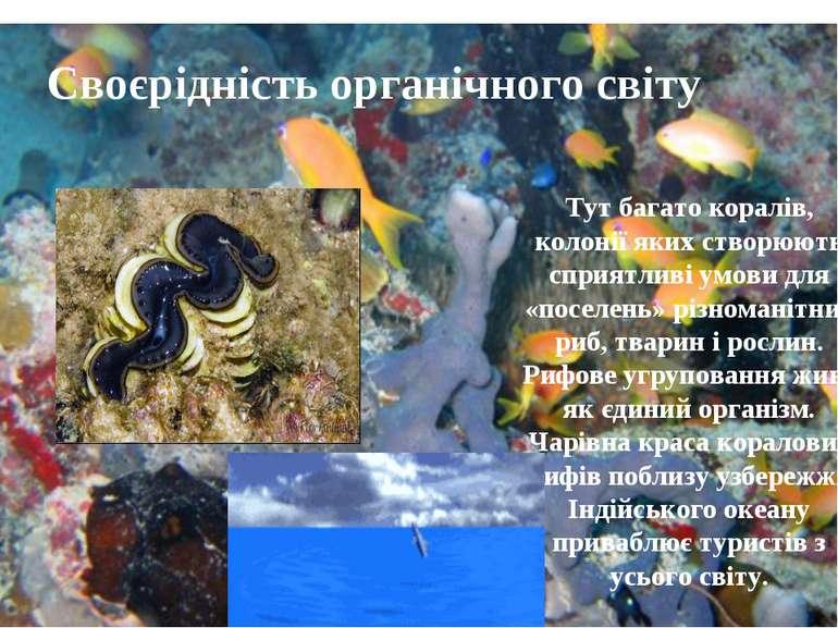 Своєрідність органічного світу Тут багато коралів, колонії яких створюють спр...