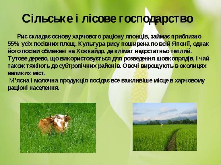 Рис складає основу харчового раціону японців, займає приблизно 55% усіх...