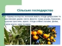 Сільське господарство В Африці експортне значення мають плоди цитрусових та м...