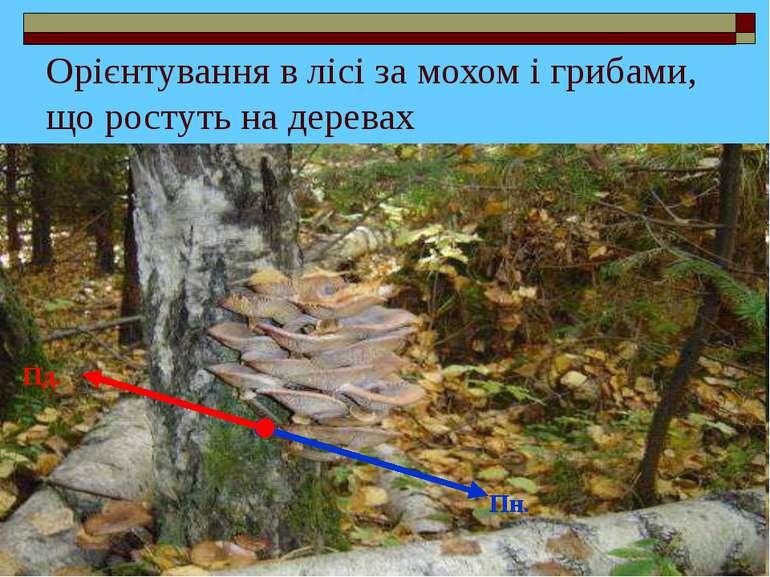 Орієнтування в лісі за мохом і грибами, що ростуть на деревах Пн. Пд.