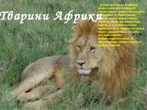 В наші дні тільки в Африці можна побачити величезні табуни диких тварин, що б...