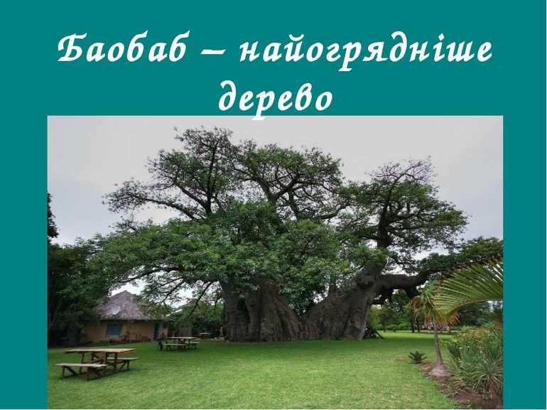 Баобаб – найогрядніше дерево Гришельова Т.І.,учитель географії Запорізької ЗШ...